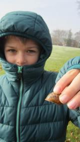 snail-shells